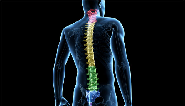Spinal Treatments - Cervical, Thoracic & Lumbar